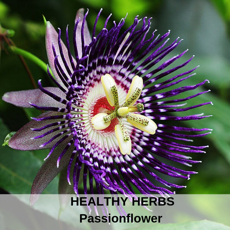 Healthy Herbs - Passionflower