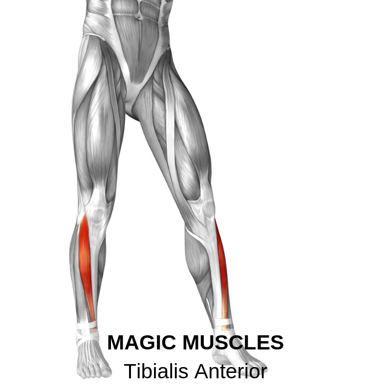 Tibialis Anterior and Tendonitis