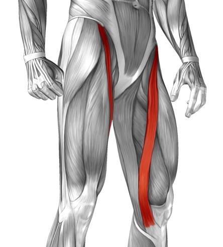 magic muscles  sartorius